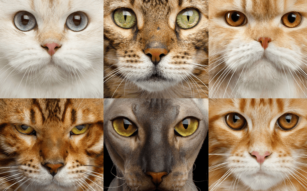 Link to article: The Purrfect Cat Breed for Your Sign