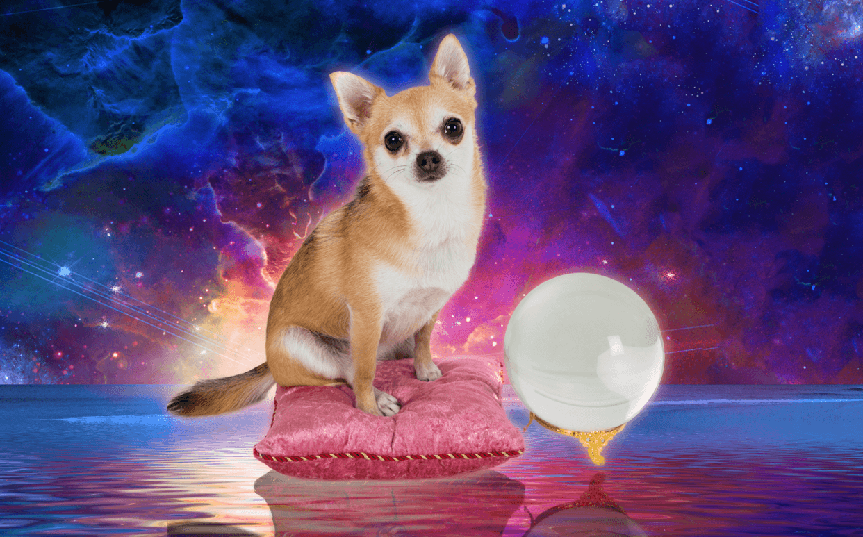 Psychic Ability in Pets